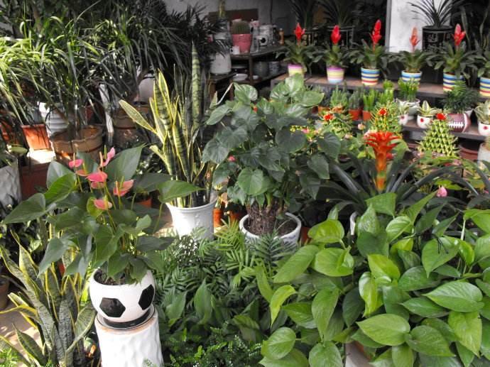 国内哪个花店管理系统软件最好?